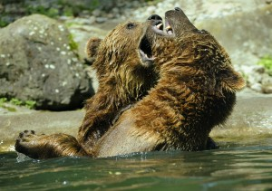 Bears-fighting-portraying-SEO-competition